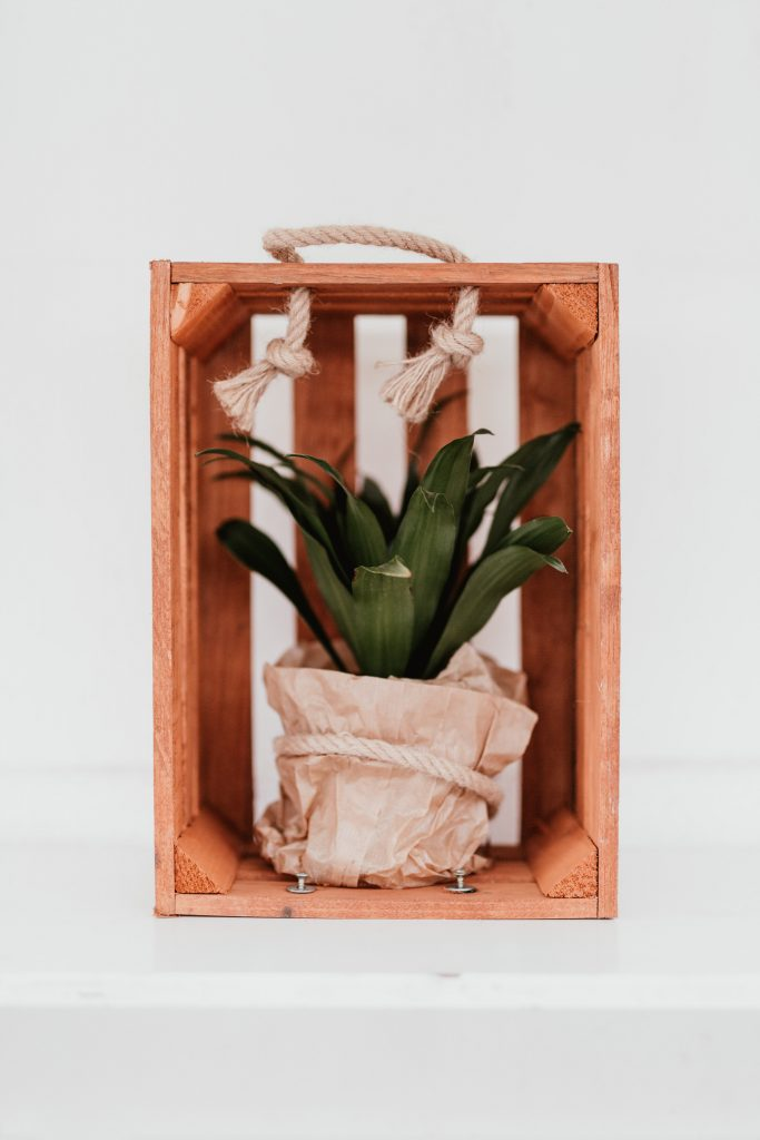 Cast-Iron Plant wooden box