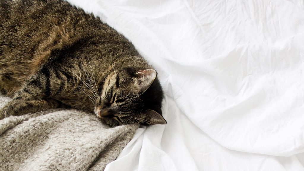 cute cat napping beige blanket white bed