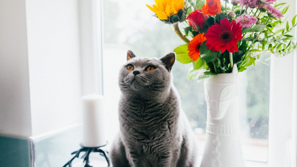 fluffy grey cat with flowers in white vase