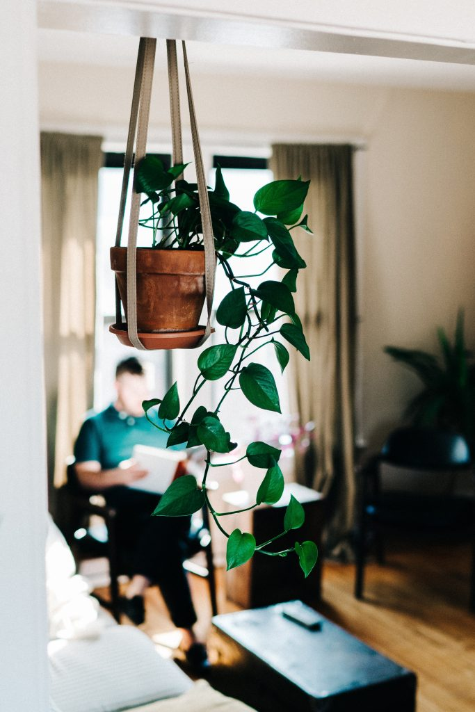 The 8 best indoor plants of 2019 - DoorFlip