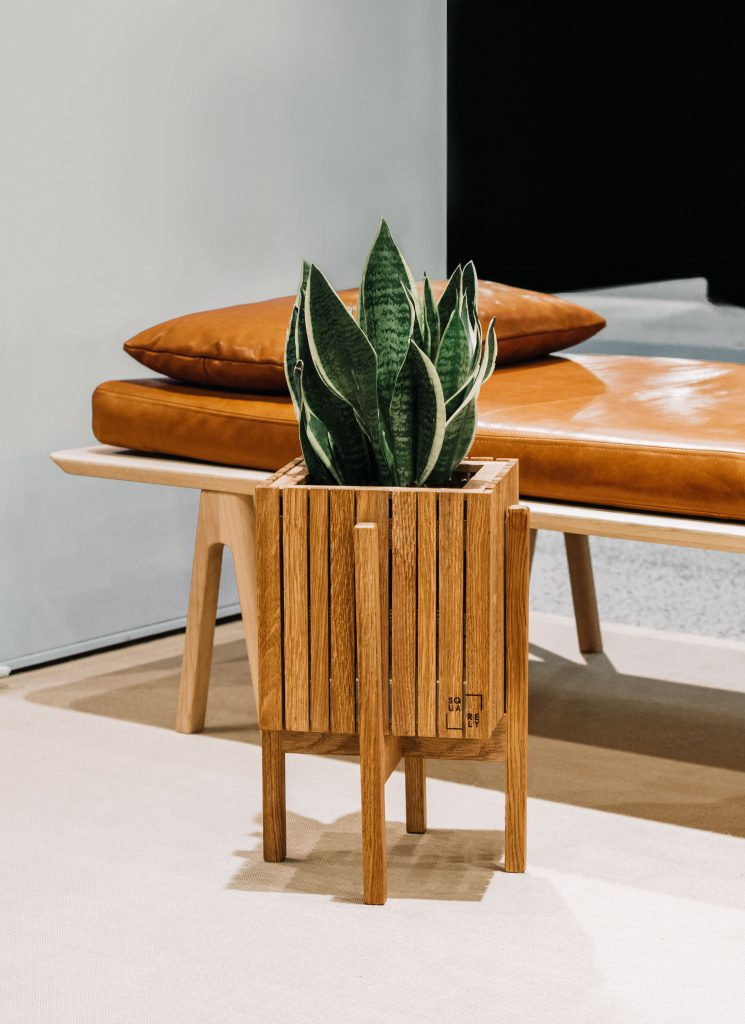 snake plant in wooden pot living room leather sofa