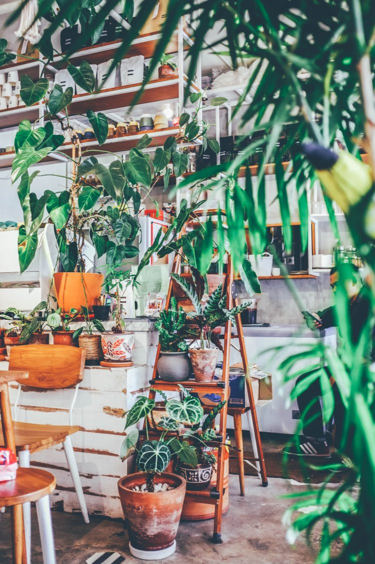 16 Cute Hanging Plants