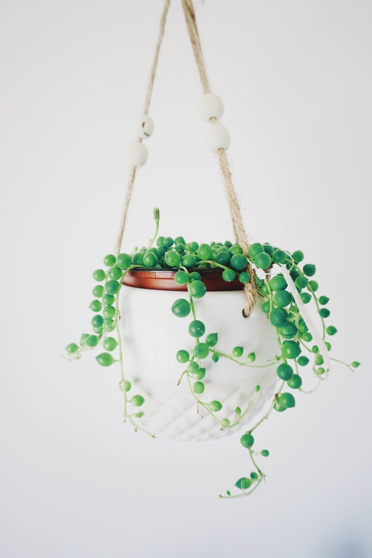 The String Of Pearls HANGING PLANT POT
