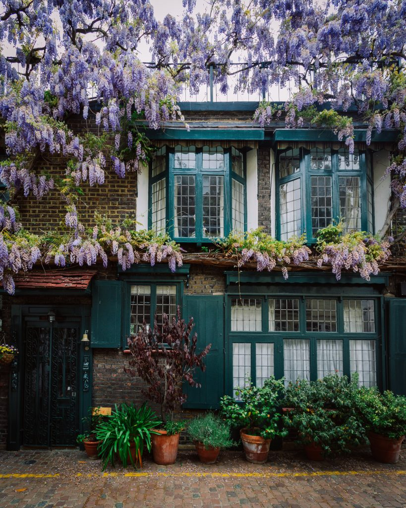Wisteria greeen house bushes
