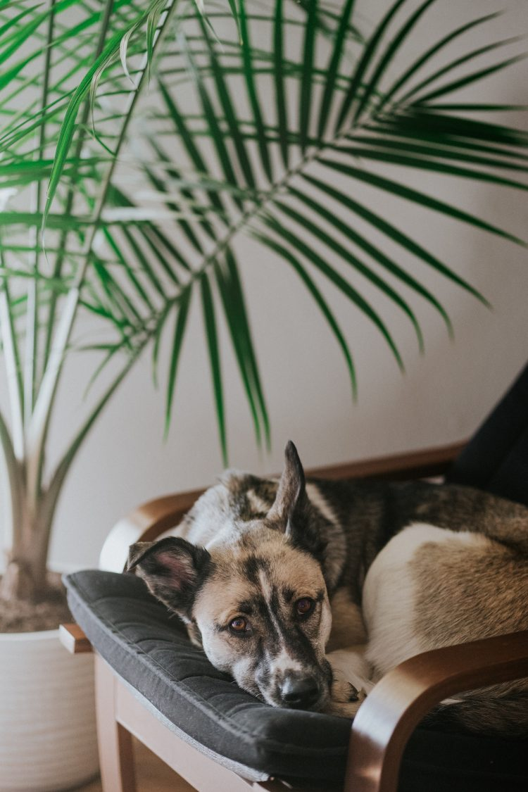 dog with indoor plant
