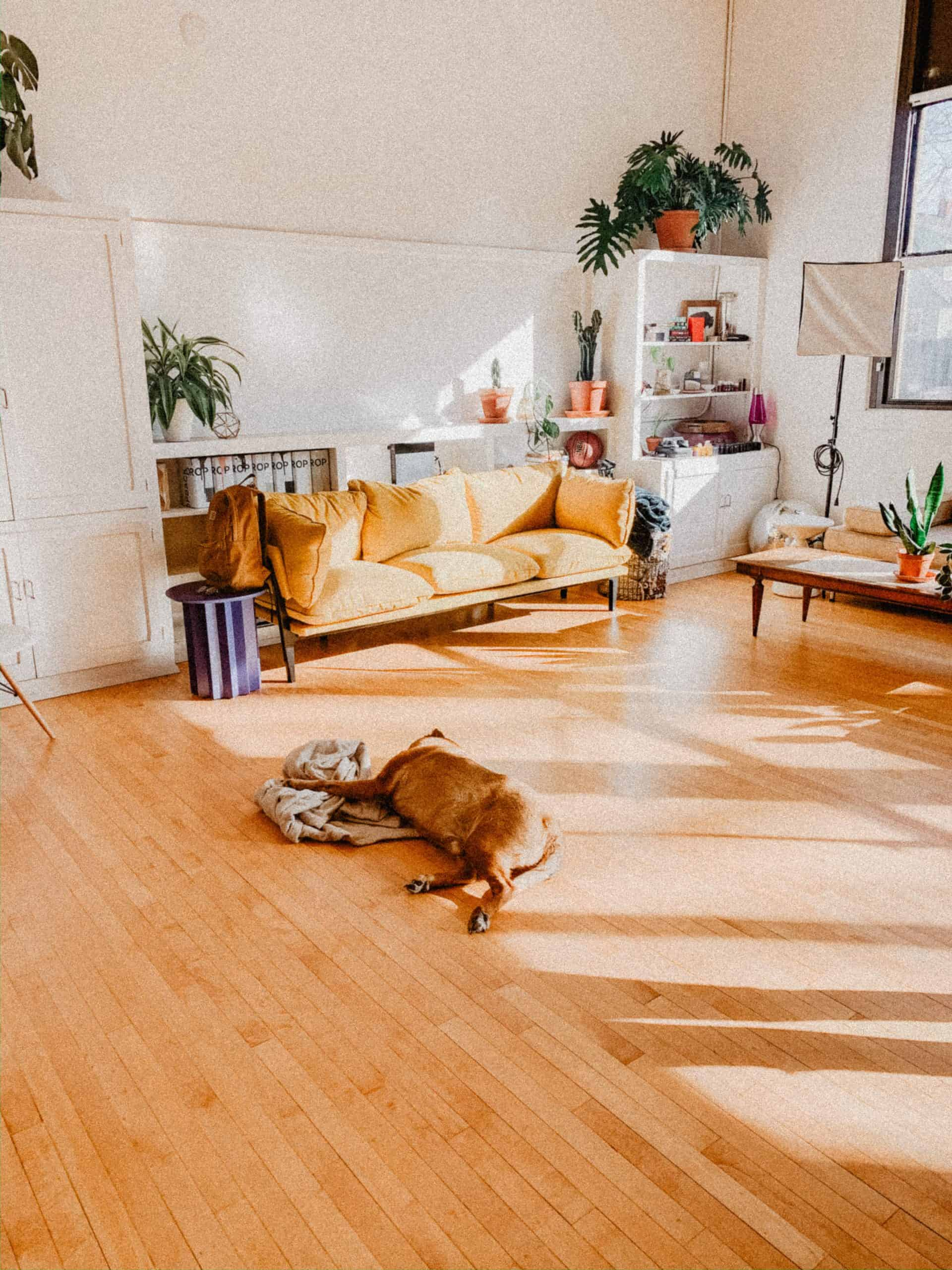 Vinyl vs Laminate floor - What you need to know