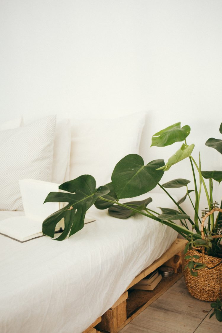 Philodendron Heartleaf bed-bright-comfortable