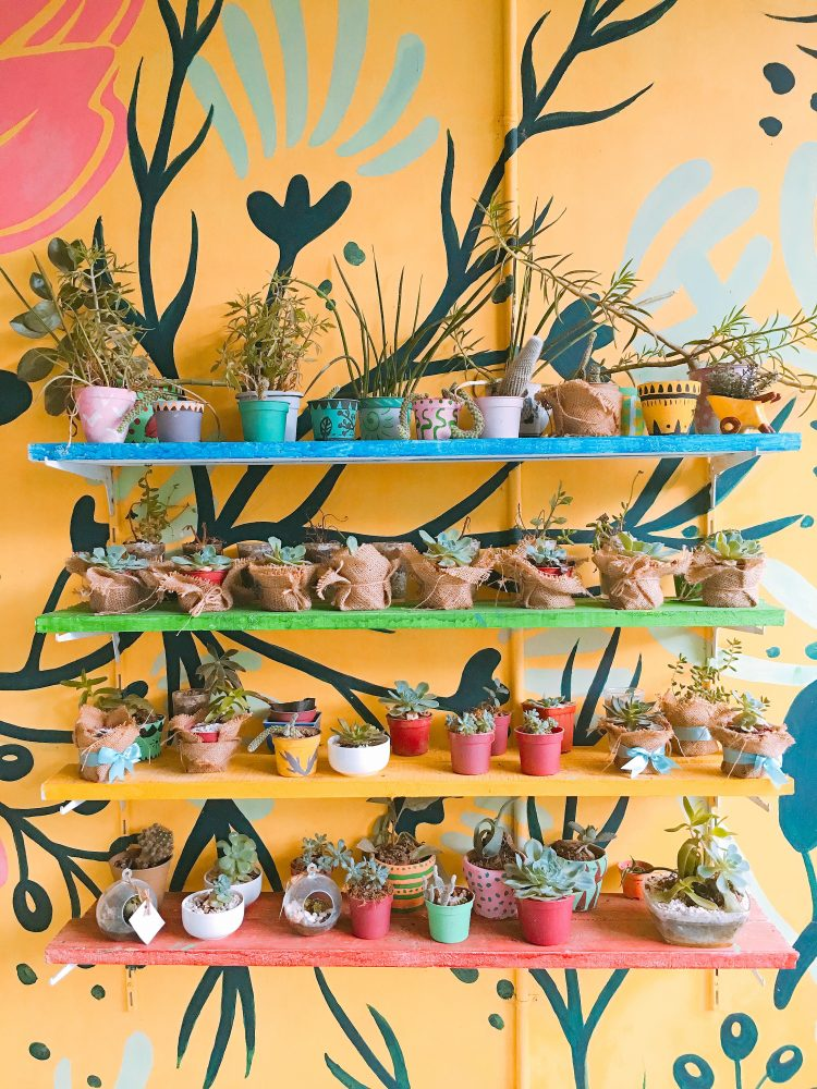 potted plants on pikn wood shelf with vibrant yellow backgeound