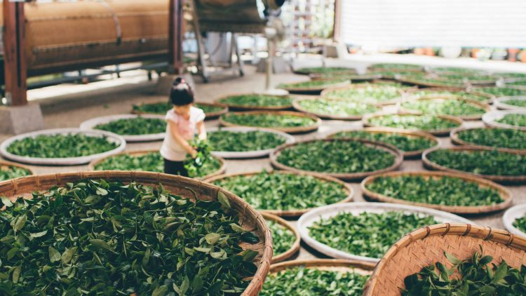 girl playing in the tea leaves for feng shui