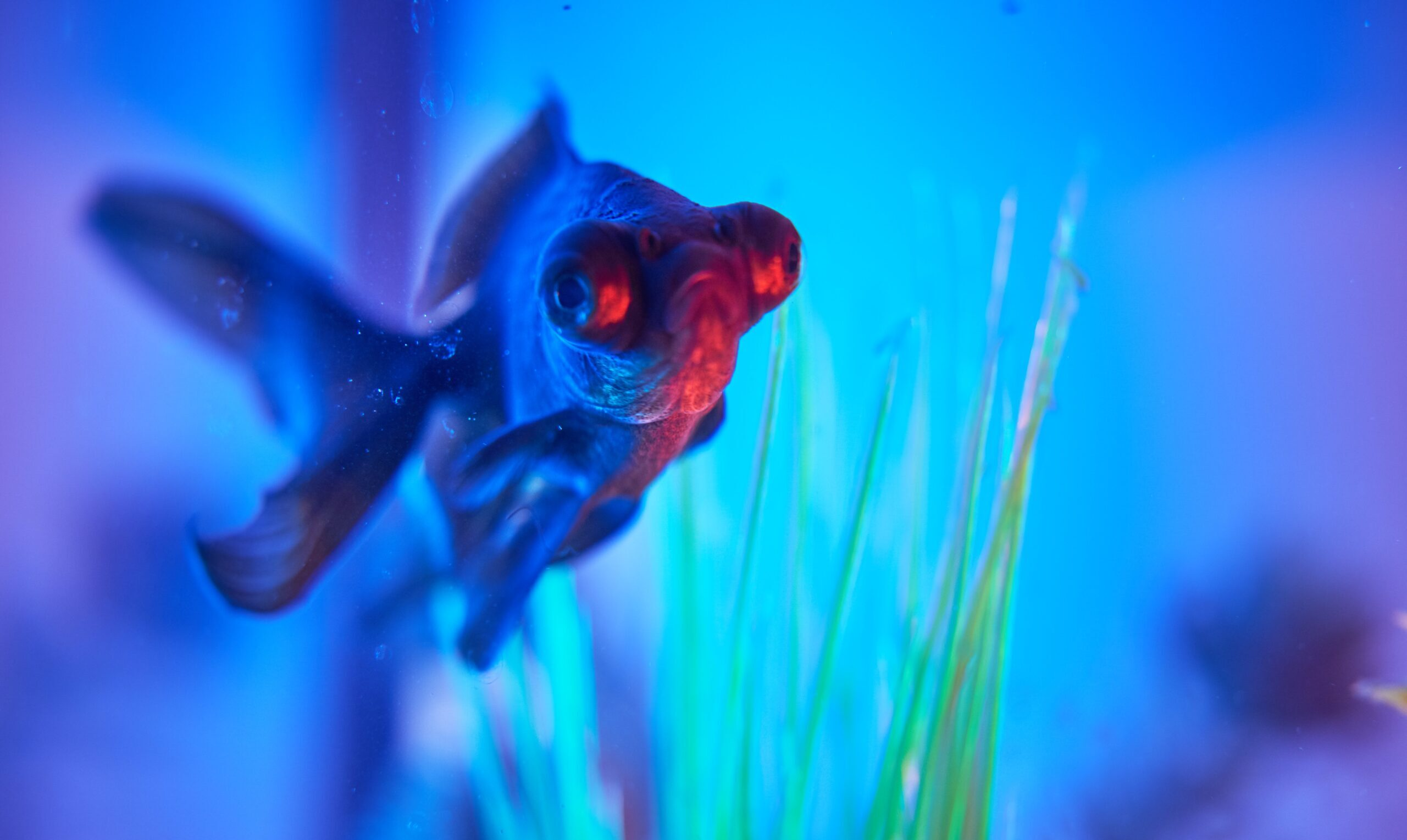 How to place feng shui fish tank the best way?