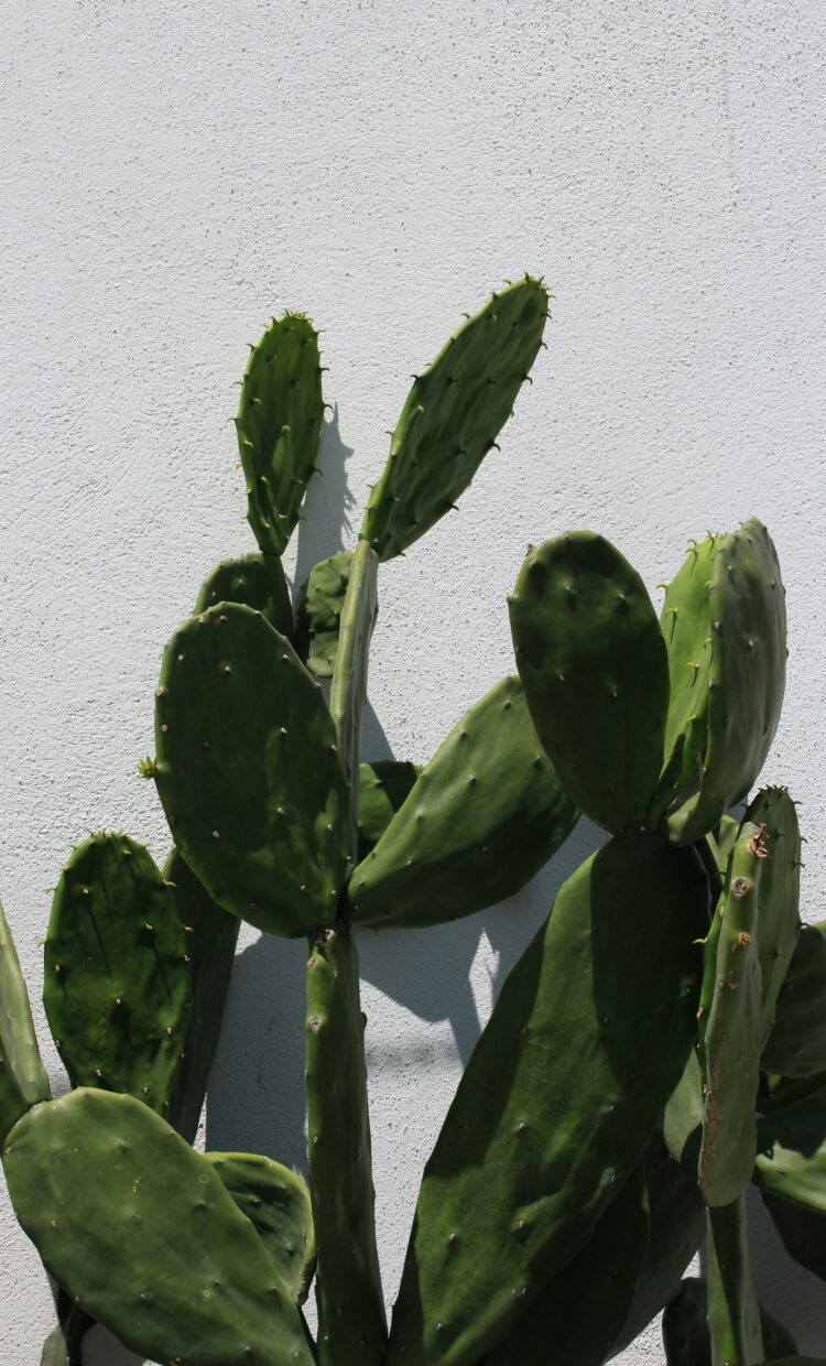 the best feng shui cactus placement you need to understand